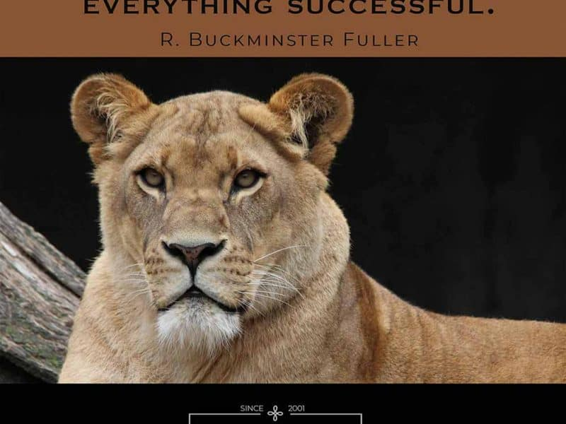Integrity is the essence of everything successful. Quote by R. Buckminster Fuller. Photo of lioness