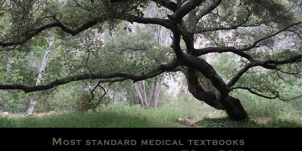 Most standard medical textbooks attribute anywhere from 50 to 80% of all disease to stress-related origins. Quote from Stanford Center for Integrative Medicine. photo of oak tree.