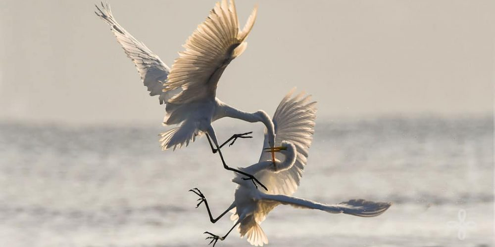 When You're Lying - photo of 2 cranes fighting in the air